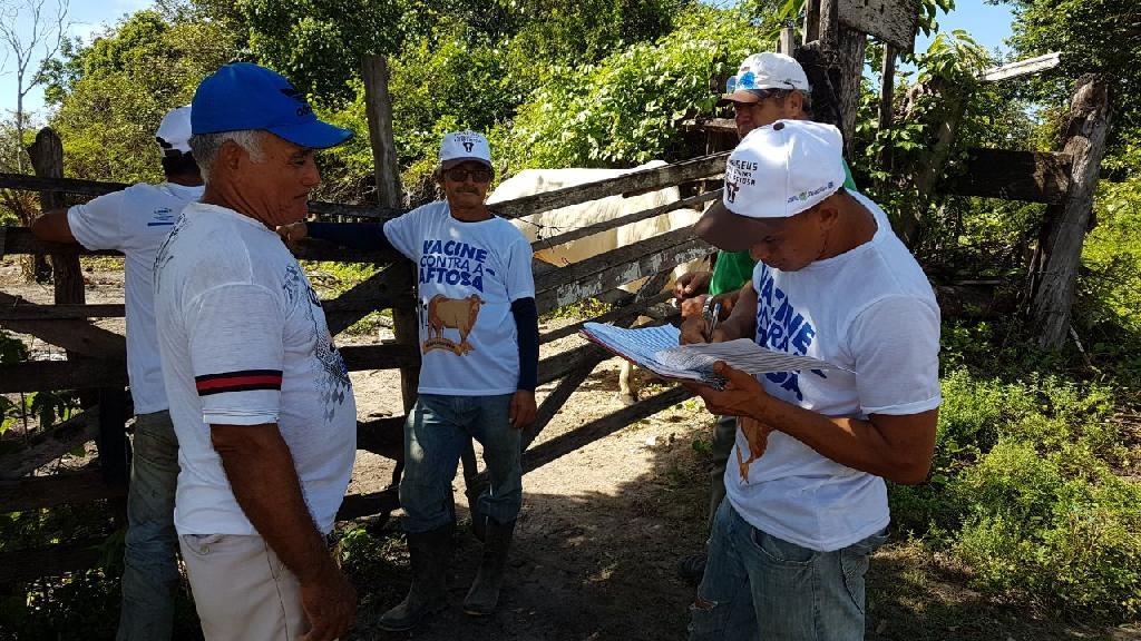 Paulista inicia Campanha de Vacinação contra a Febre Aftosa
