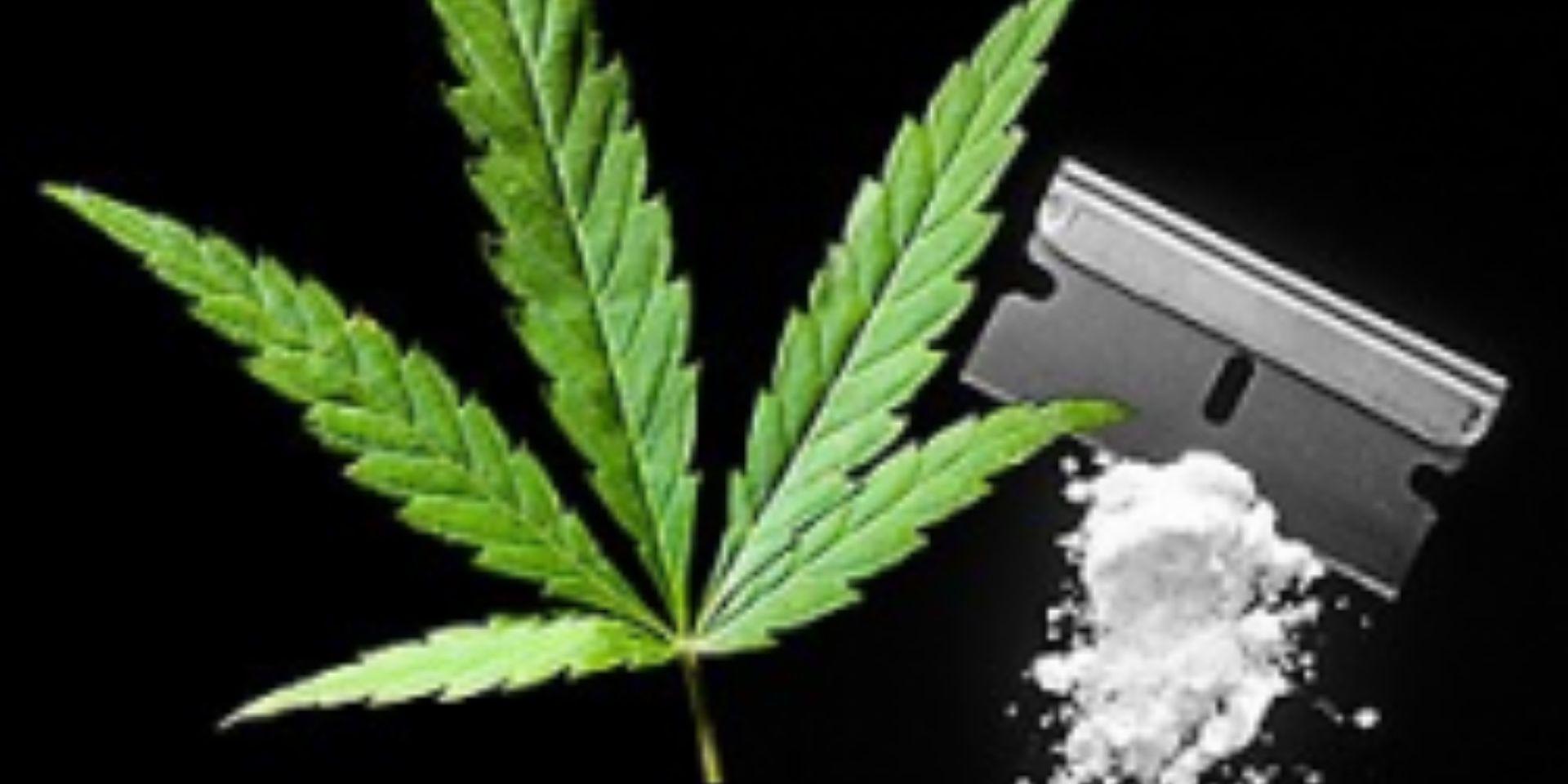 Uso de maconha para o tratamento de dependência em cocaína: estudo é contestado