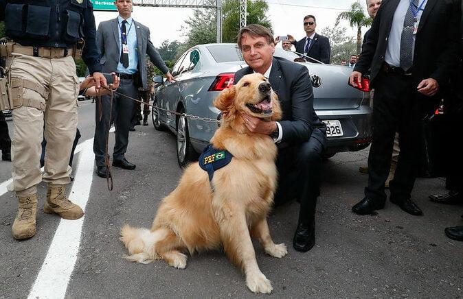 Presidente Bolsonaro cria departamento de política pública para cães, gatos e outros animais