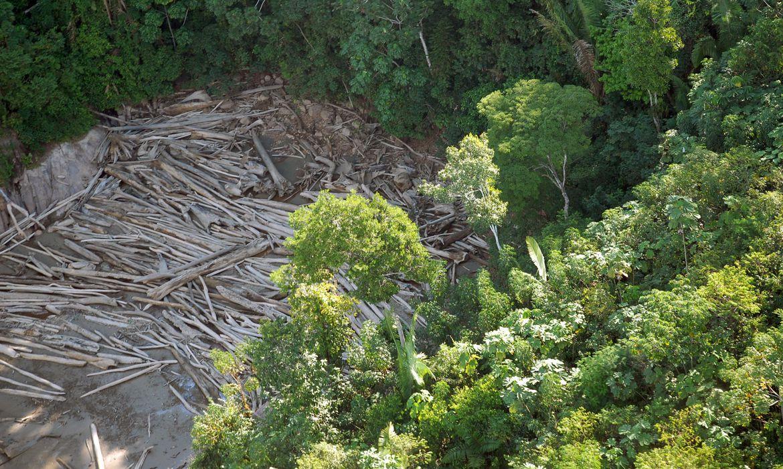Operação contra desmatamento resulta em mais de R$ 55,5 milhões em multas
